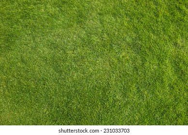 Green grass pattern image. Top view angle.