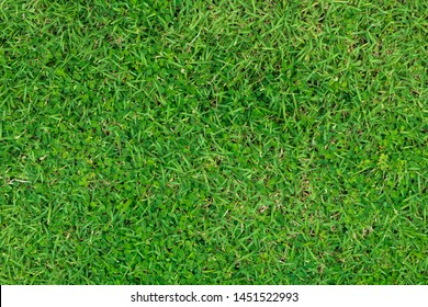 Green grass pattern and texture for background
