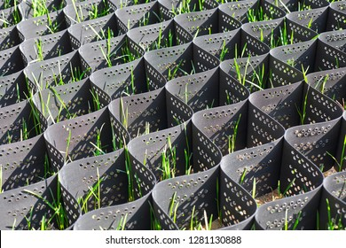 Green grass in a plastic black honeycomb frame to prevent soil erosion on the slope