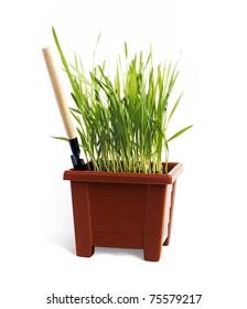 Green grass in the pot