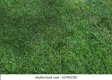 Green grass seamless texture,top view, horizontal