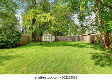 Green grass and a shed in empty fenced back yard. Northwest, USA