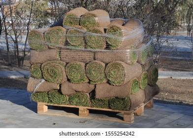 Green grass as sod rolls wrapped in plastic net upon a wooden pallet on tiled flooring among trees