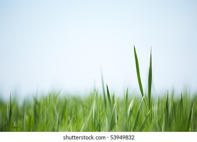 Green grass soft abstract background. Shallow focus depth on two blades