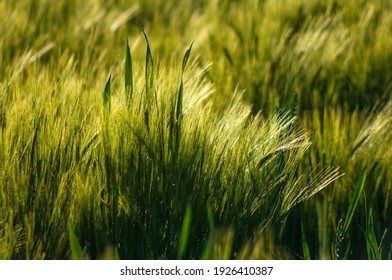green grass in a spring meadow on a sunny day