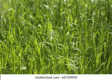 Green grass summer background