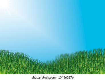 Green grass with sunny blue sky