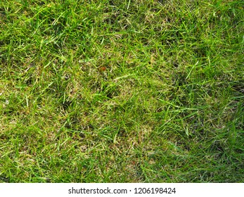 Green grass in sunny day, background, texture