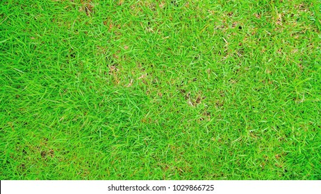 Green grass surface. Top view of green grass Design for the background