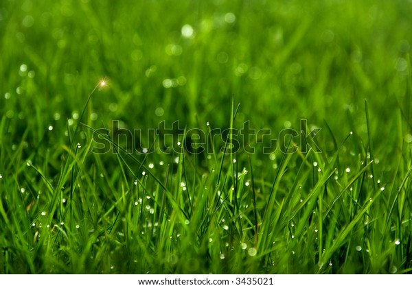 Green grass with tears of dew on it (with an artificial glow)