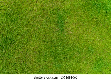 Green grass texture and background.