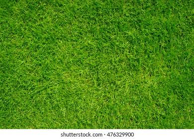 Green grass texture background.