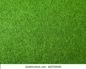 Green grass texture for background. Top view photo