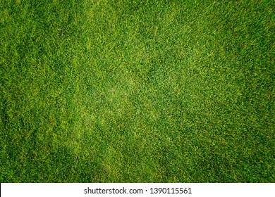 green grass texture background;nature background