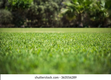 Green grass texture from a field. Natural backgrounds with beauty bokeh