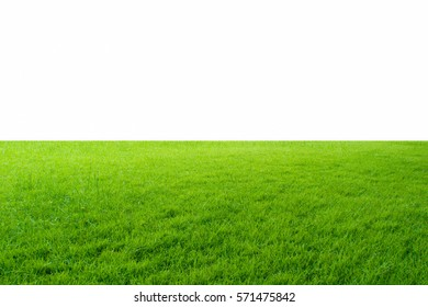 Green grass texture isolated on white background with copy space. For lawn.