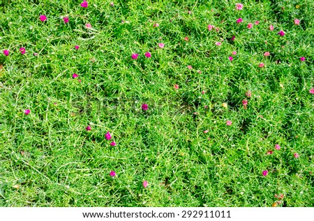 Green grass texture pink flowers stock photo edit now 292911011 green grass texture with pink flowers mightylinksfo