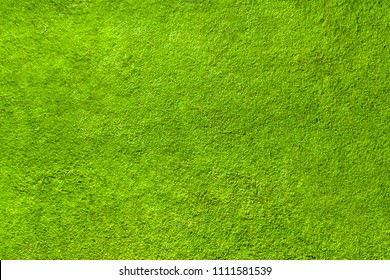 Green grass texture, top view