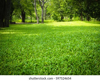 green grass with thee in park