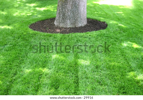 green grass and tree