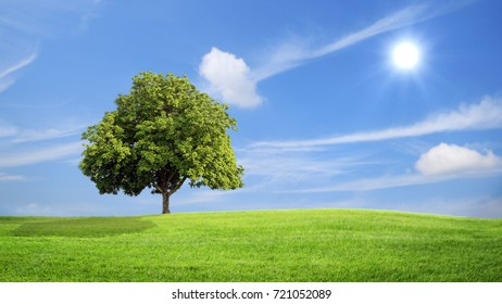 Green grass and tree with clouds  background, green concept.