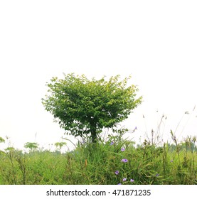 green grass with tree isolated on white background