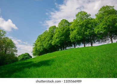 Green grass and tree up on the hill near the Battle of the Nations, Leipzig, Germany