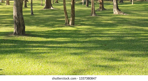 Green grass and trees in park with sunlight