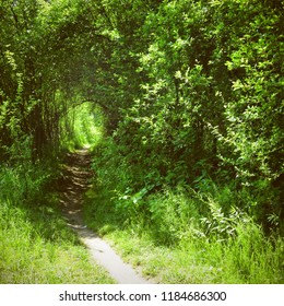 Green grass of tunnel in the woods with path leading through trees and bushes. Beautiful summer light, romantic scenery wallpaper.