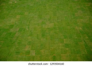 green grass turf fresh texture background