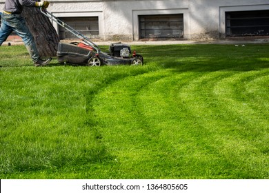 Green grass for use as nature background