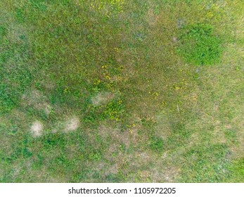 Green grass view from above. Natural texture.