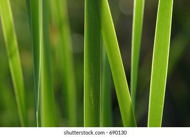 Green grass viewed against the light.