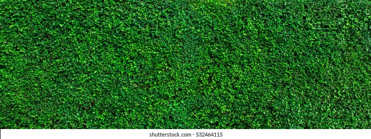 Green grass wall texture for backdrop design and eco wall and die-cut for artwork.