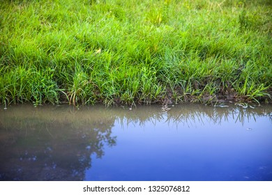 Green grass and water