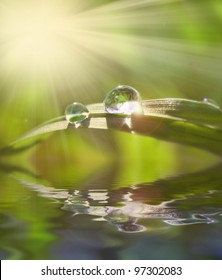 green grass in water