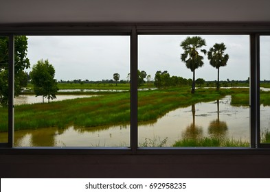 Green grass and water field in the window