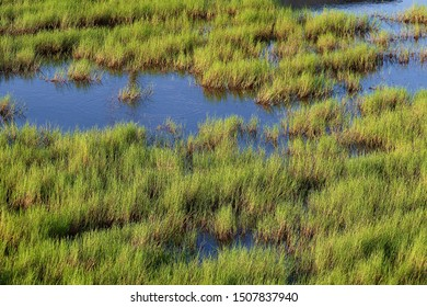 green grass in wetlands in Taiwan