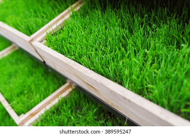 green grass in a wooden box