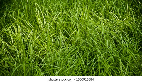Green grasses around a sports field natural photo