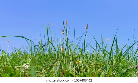 Green grasses and blue sky in background
