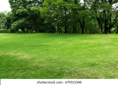 Green grasses field and garden in public park at summer holiday.