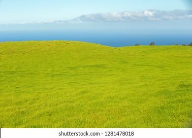 Green grasses of the Northern Kohala mountain side, Big Island, Hawaii