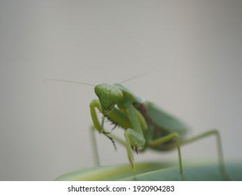 A green grasshopper with big eyes is staring at you.