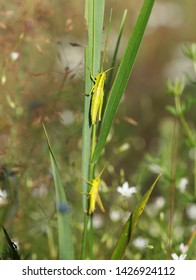 Green grasshopper on the grass, selective focus