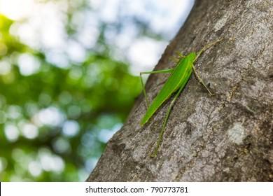 Green grasshopper on the tree