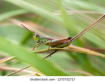 green grasshopper sits on the grass Stock photo