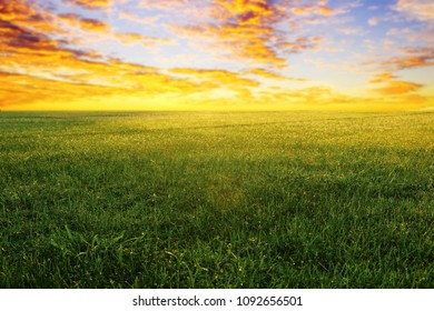 green grassland in the morning sunrise.