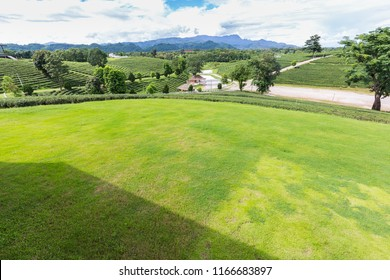 green grasss garden with mountain background