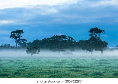 Green grassy paddock with gum trees and bank of fog under dark overcast sky